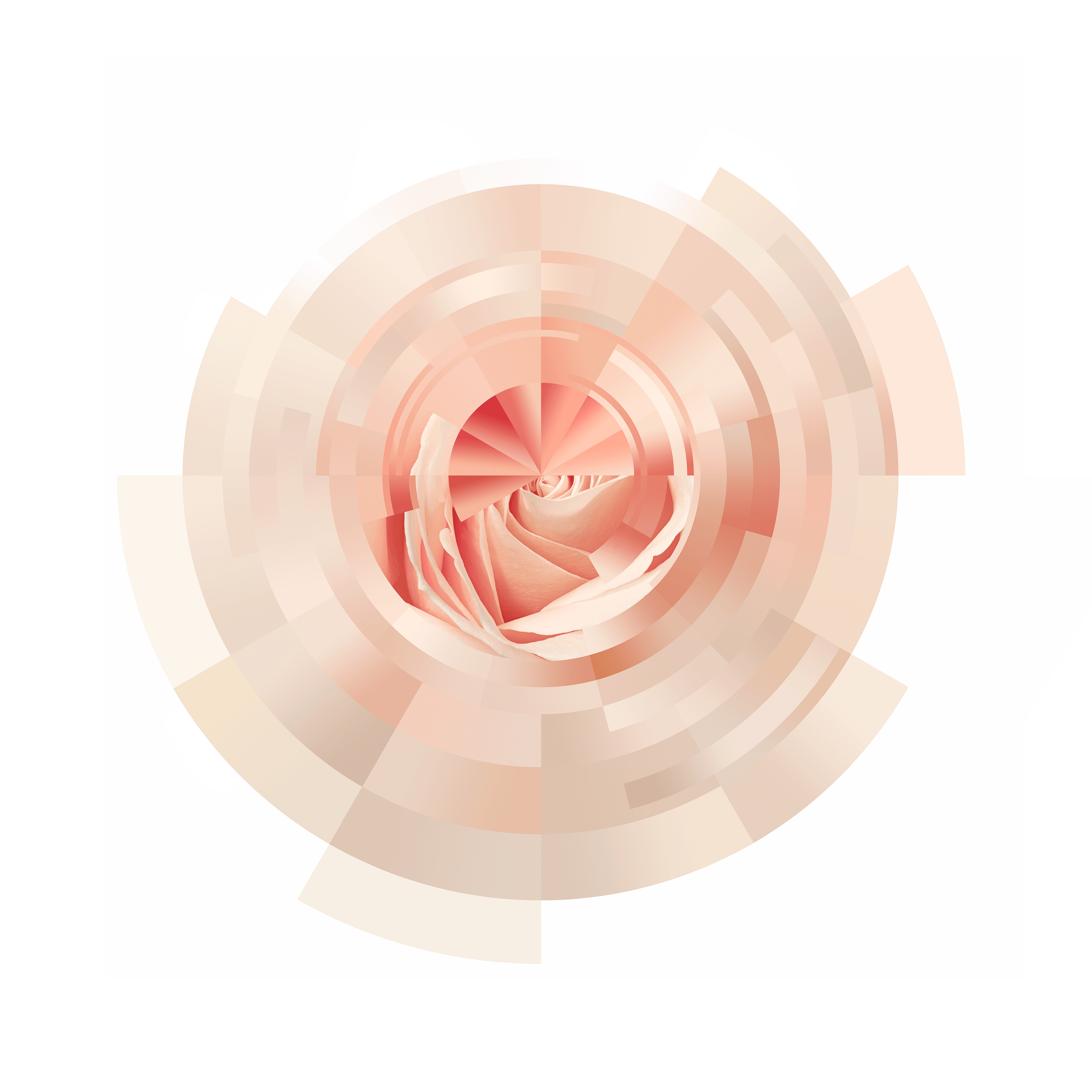 Cartographic Colour – Rose